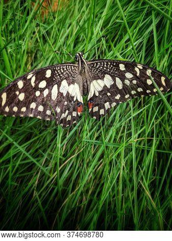 Beautiful Butterfly Landing In A Grass Field