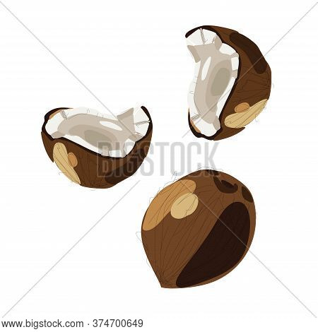 Pieces Of Coconut, A Set Of Cut Halves Of White Coconut .vector Illustration Of A Fruit Coconut, On
