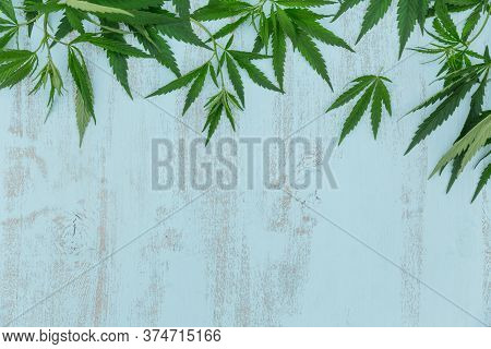 Top View Of Green Cannabis Leaves Border On Light Blue Wooden Background With Copyspace For Text