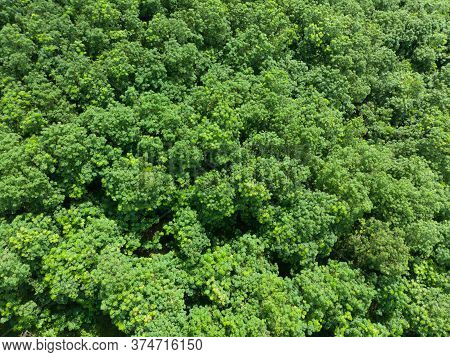 Treetops In A Tropical Forest That Is Blown By The Wind In The Summer Before Entering The Rainy Seas