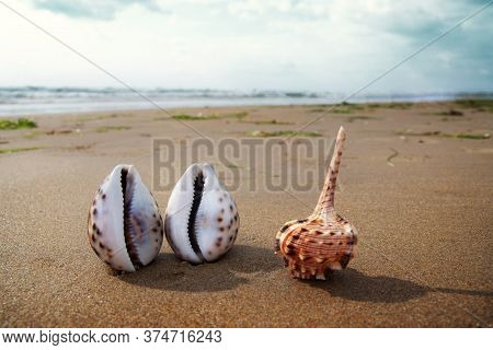 Beautiful Seashells On Black Sand At Sunset. Lonely Seashells On The Beach Lit By The Setting Sun