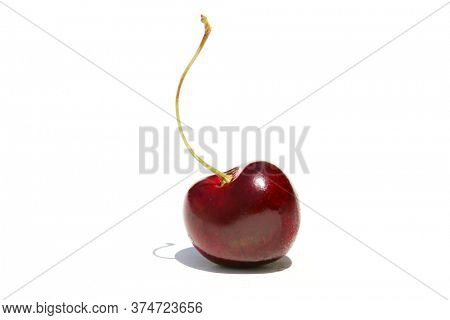 Bing Cherry. A Single Bing Cherry with stem. Isolated on white. Room for text. Cherries are loved by humans and animals alike world wide. Enjoy some Cherries Today.