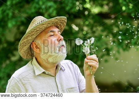 Tranquility And Serenity. Harmony Of Soul. Elderly Man In Straw Summer Hat. Lonely Grandpa Blowing D