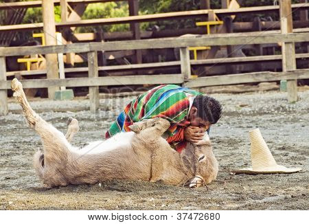 Donkey First Aid