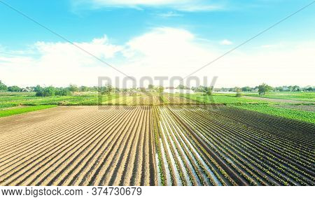 Farm Field Is Planted With Agricultural Plants. Growing And Producing Food. Rural Countryside. Water