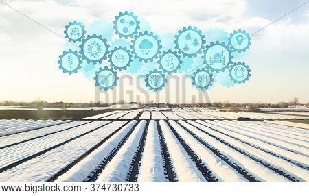 Futuristic Innovative Technology Pictogram On A Plantation Fields Covered With Spunbond Agrofibre. A