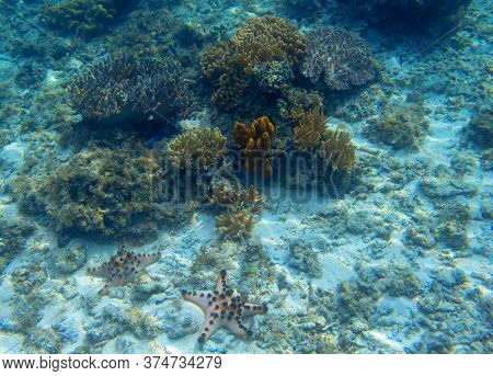 Underwater Landscape With Coral And Starfish. Coral Reef Diversity Undersea Photo. Bright Yellow Cor