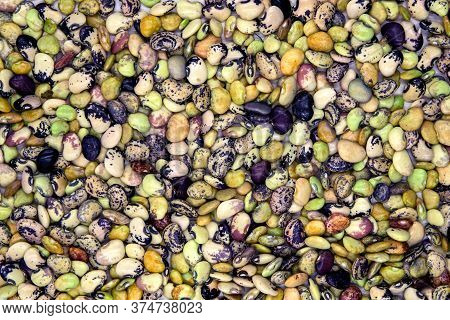 Multicolored Bean Pile Texture Top View Photo. Phaseolus Bean Texture. Green And Red Kidney Bean Fla