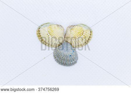 Three Beautiful Seashells On A White Background. Small Seashells On A White Background