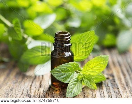 Mint Leaves And Glass Bottle, Mint  Leaves Used For Digestion Problems
