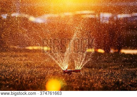 Lawn Sprinkler Spraying Water Over Fresh Lawn Grass In A Garden Or Backyard On A Hot Summer Day