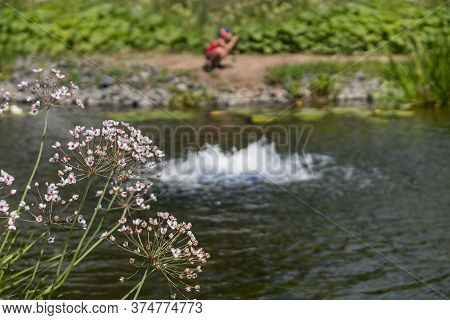 Asclepias Fascicularis In The Foreground.  The Boy Sitting On The Shore Is Out Of Focus.