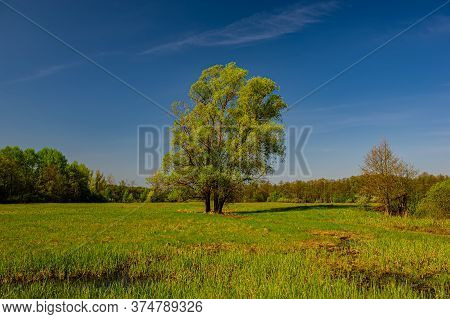 Blossoming Green Deciduous Trees And Meadow, Landscape. Spring Season In The Countryside.