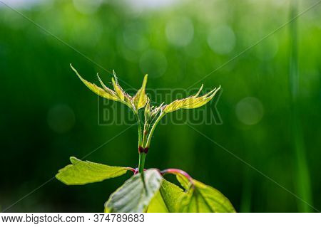 Blooming Green Foliage Plants On Blurred Green Meadow Background. Summer Season. Web Banner.