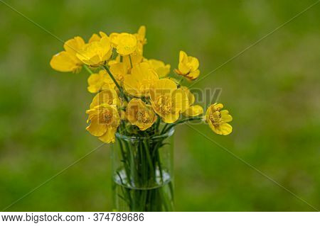 Bouquet Of Blossoming Yellow Flowers Of Caustic Buttercup On A Blurred Green Background. Summer Seas