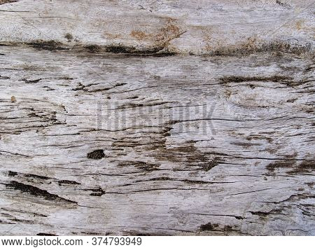 Textured Wooden Texture Closeup. Raw Timber With Grungy Cracks. Natural Surface For Vintage Backgrou