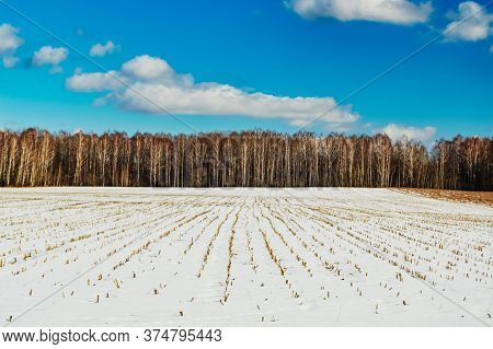 Winter Landscape. A Snow-covered Field On The Edge Of A Coniferous Forest, A Sunny Day In The Forest