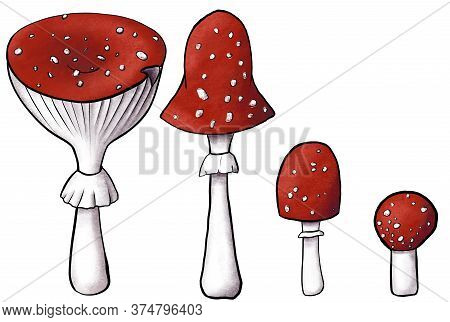 Developmental Stages Of Redcap Fly Agarics. Hand-drawn Poisonous Mushrooms With Dots On Red Caps And