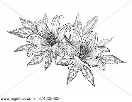 Hand Drawn Bunch With Lily Flowers, Bud And Leaves Isolated On White. Vector Monochrome Elegant Flor