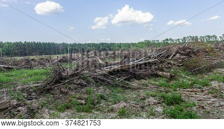 Area Of ​​illegal Logging. Forests Deforestation Humans Are Causing Global Warming. Deforestation, D