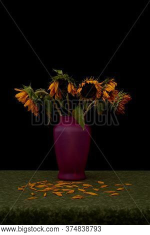 Still Life Portraying Dead Wilting Sunflowers Against Black Background Shedding Their Petals Onto Gr