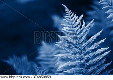 Fern Pattern. Background Made With Young Green Fern Leaves. Green And Macro Leaves. Floral Fern Back
