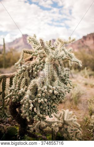 Spiny Cactus In The Desert