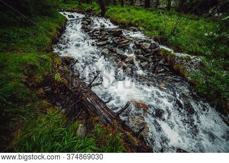 Beautiful Mountain Creek Among Rich Flora In Dark Forest. Atmospheric Landscape With Rotten Log In S