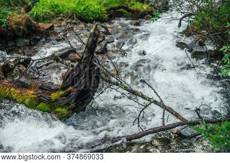 Beautiful Mountain Creek Among Rich Flora In Forest. Atmospheric Landscape With Mossy Log In Small R