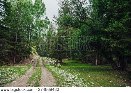 Atmospheric Green Forest Landscape With Dirt Road Among Firs In Mountains. Scenery With Dirt Road On