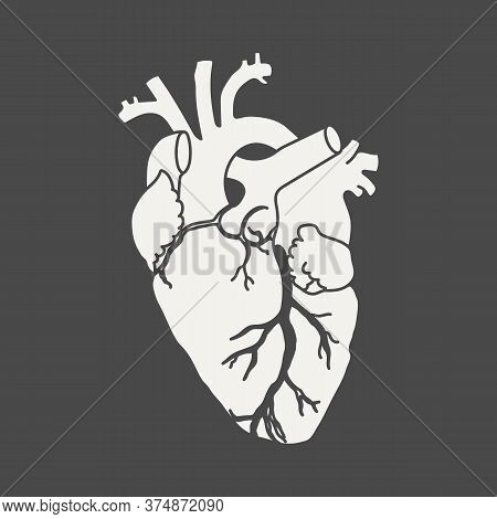 Anatomical Human Heart - White Silhouette Isolated On Black Background. Hand Drawn Sketch. Vector Il