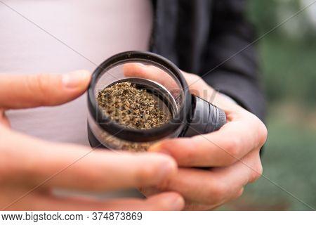 Sativa Thc Cbd. Marijuana Weed Bud And Grinder. Indica Medical Health. Grinder For Weed In Hand.
