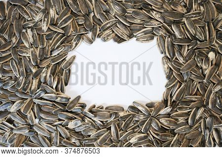 Organic Sunflower Seed For Background And White Space For Copy