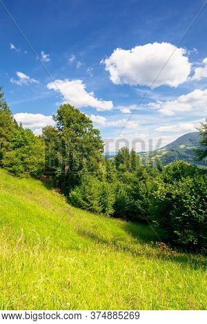 Summer Mountain Landscape. Trees On The Green Grassy Hill. Puffy Clouds On The Blue Sky. Idyllic Sce