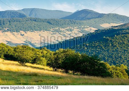 Trees On The Hillside Meadow In Mountains. Sunny Morning Scenery Of Carpathian Countryside