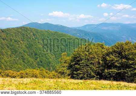Beech Forest On The Hills. Wonderful Landscape Of Carpathian Mountains On A Sunny Day In August. Mea