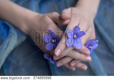 Overhead View Of Purple Violets In Girl's Hand With Manicure Isolated On Purple Background. Flat Lay