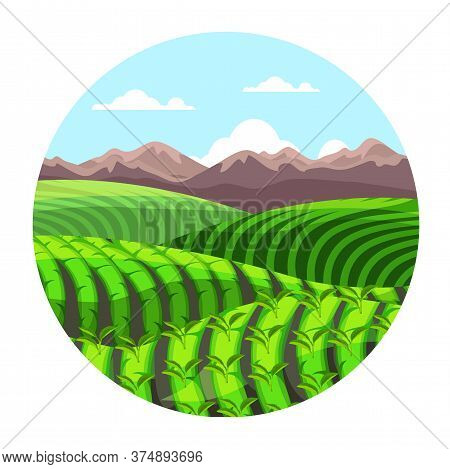 Green Tea Plantation Hills In Mountains Landscape. Cartoon Cascade Valley In Circle Frame. Farm Agri