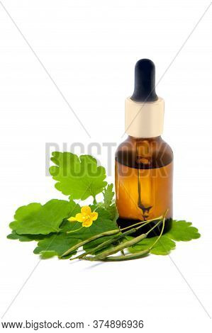 Greater Celandine (chelidonium Majus) Oil Extract In A Bottle With Leaves And Flower Of A Medicinal