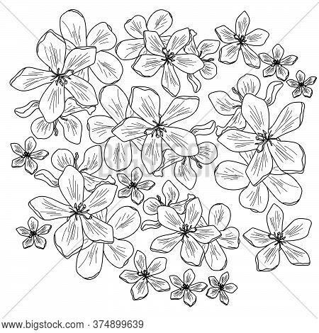 Vector Outline Flower Illustration, Polianthes Tuberosa Coloring Page, Floral Set Hand Draw Illustra
