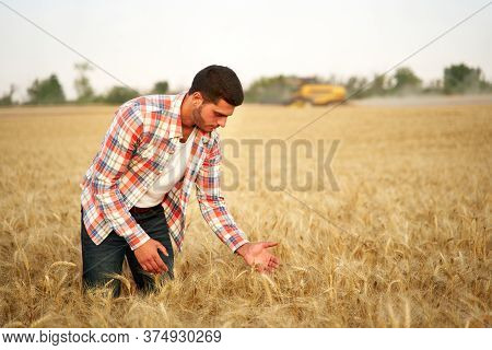 Agronomist Examining Cereal Crop Before Harvesting Sitting In Golden Field. Smiling Farmer Holding A