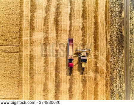 Aerial Drone View From Above: Overloading Grain From Combine Harvesters Into Grain Truck In Field. H