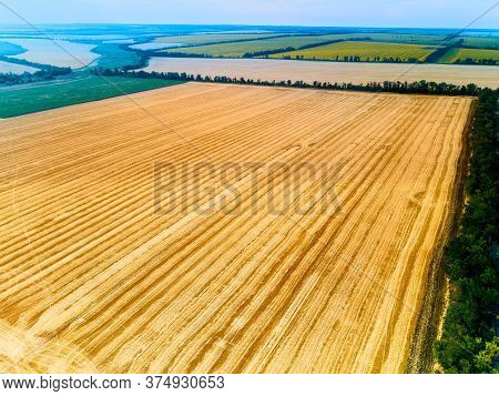 Aerial Drone Photo Of Rural Landscape With Harvested Wheat Field Full Of Stubble. Quadcopter Shot Of