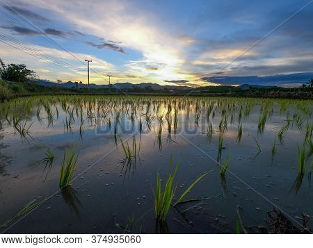 Beautiful View Of Rice Paddy Field And Clouds During Sunset With Water-filled Rice Paddies And Refle