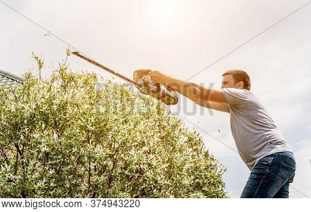 A Gardener Trimming Trees With Hedge Trimmer