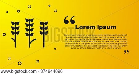 Black Cereals Set With Rice, Wheat, Corn, Oats, Rye, Barley Icon Isolated On Yellow Background. Ears