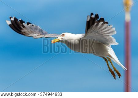 Seagull Hovers Above St Mark`s Square (san Marco), Venice, Italy. This Place Is Top Tourist Attracti