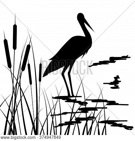 Drawing In Black, Silhouette Of Storks And Grass, Vector Illustration, Isolate On A White Background