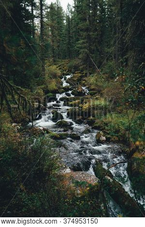 Vertical Shot Of A Beautiful Fast Stream In A Deep Forest With Mossy Stones In The Center; A Scenery