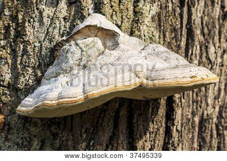Parasite Fungus